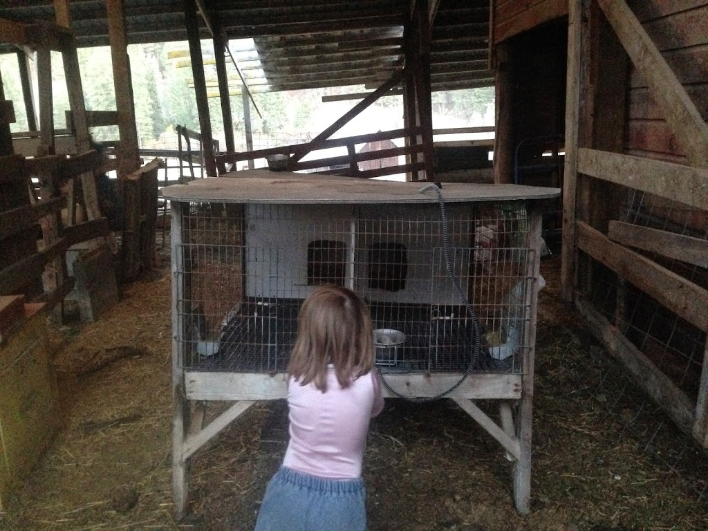 What My Bunnies Have Taught Me…So Far