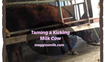 Taming a Kicking Milk Cow