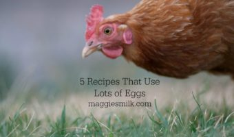Lots of Eggs? Try These 5 Recipes