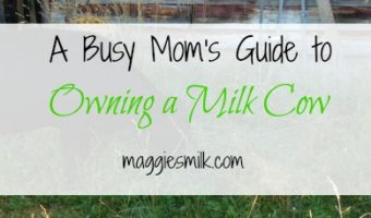 A Busy Mom's Guide to Owning a Milk Cow