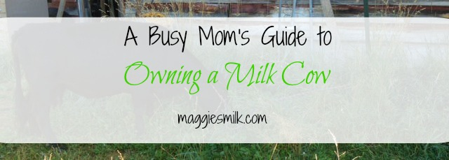 Think you're too busy for owning a milk cow? Here's how I'm handling it!