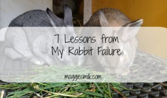 7 Lessons from My Rabbit Failure