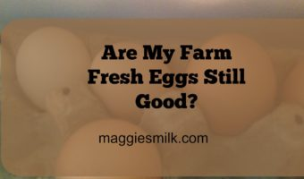 Are My Farm Fresh Eggs Good?