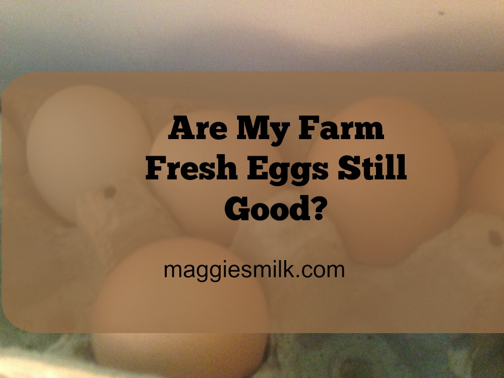 Farm fresh eggs are delicious! But if your chickens free-range and don't always lay in the coop, you need to know if those eggs are still good. Here are some quick tests to tell.