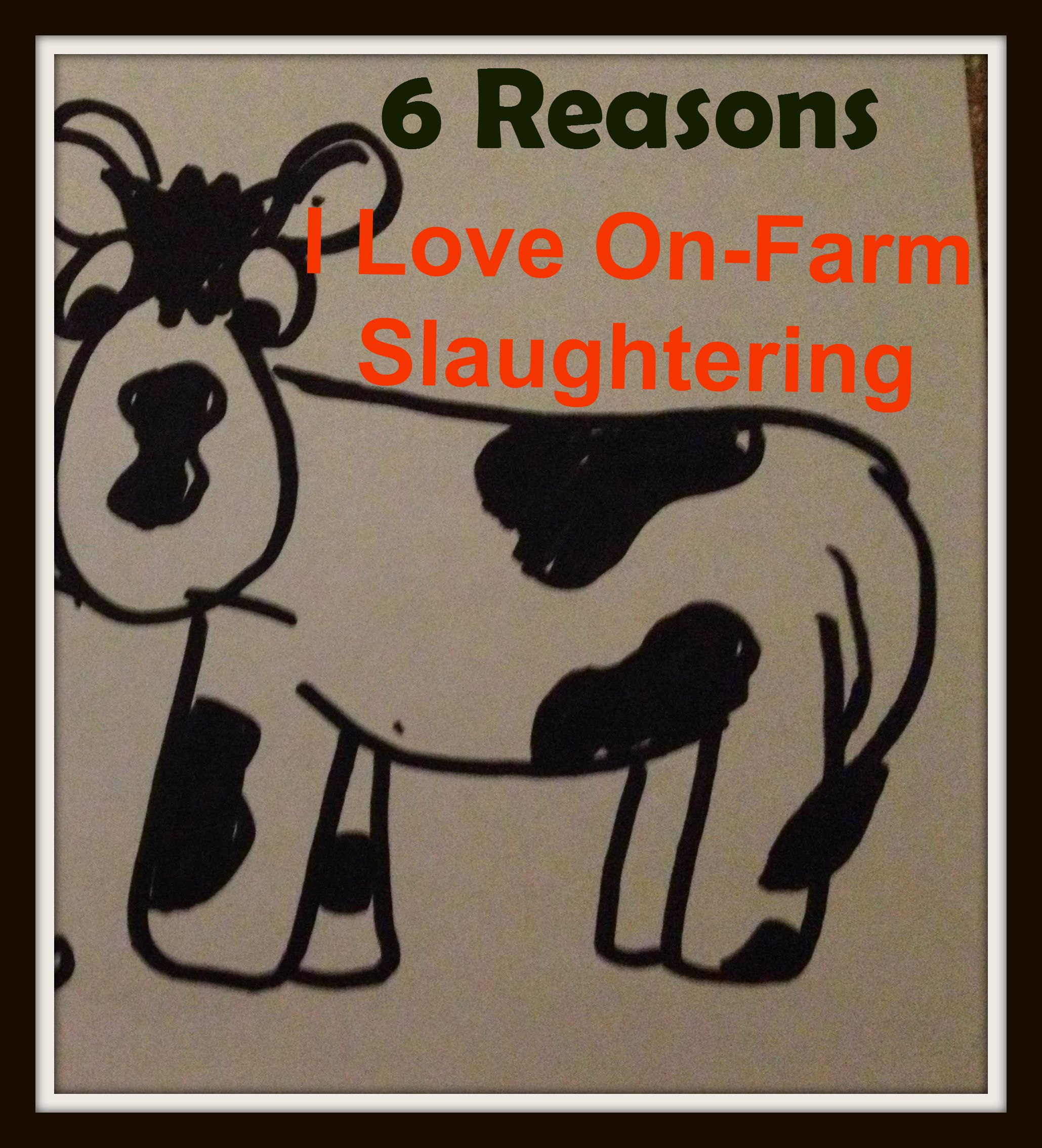Six Reasons I Love On Farm Slaughtering