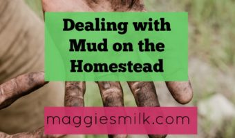 Dealing with Mud on the Homestead