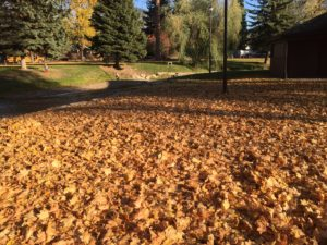 Leaves cover the ground at the Chewelah Park.