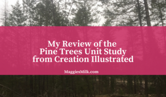My Review of the Pine Trees Unit Study from Creation Illustrated